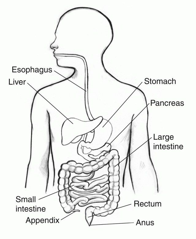 Picture Of Digestive System With Labels