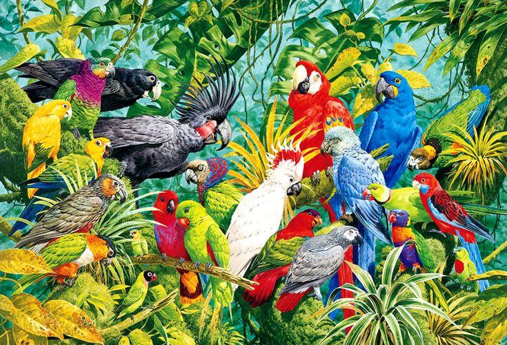 Parrots, parrots, parrots!