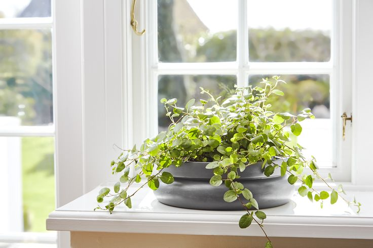 Display the seasons flowers with • Hinken pots • Designed by Silje Nesdal & Ann Kristin Einarsen #flowerpots #flowers #pots #spring #accessories #ceramic #norwegian #design #WOUDdesign