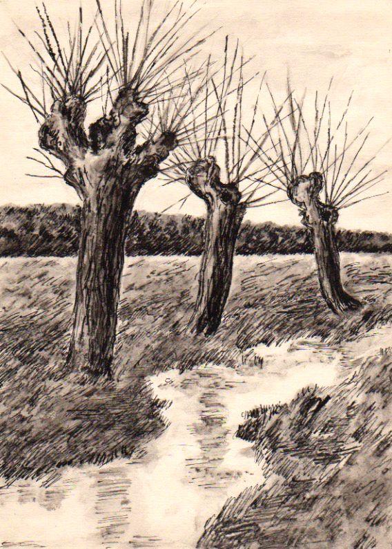 Vrby U Potoka Lavirovana Kresba Tusi Jana Haasova Trees Rocks