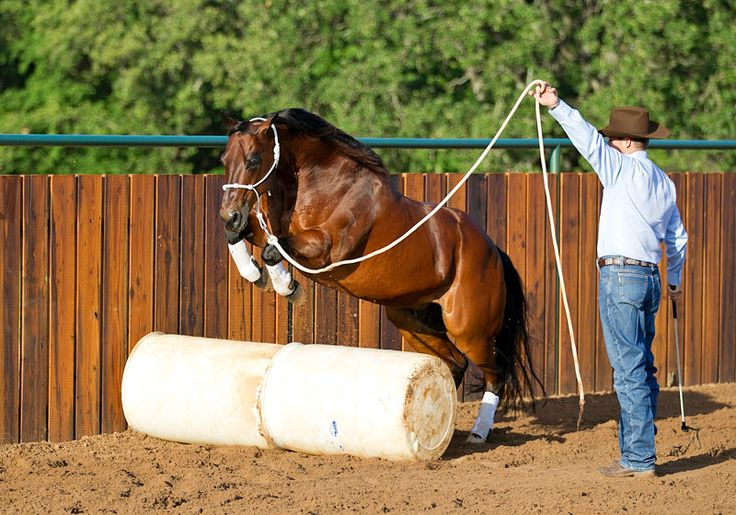 Incorporate jumping into your groundwork routine to challenge your horse and build his confidence.