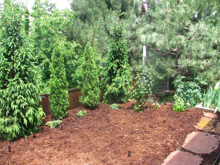 A privacy shrub line with varied evergreens landscaping ideas pinterest privacy shrubs - Evergreen landscaping ideas ...