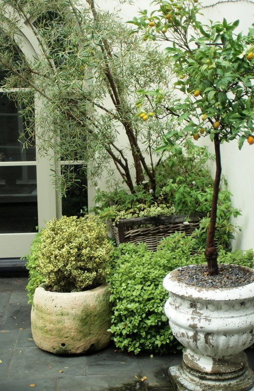 Elegant Potted Trees On The Patio.Is That Hypertufa? Or Carved Rock? I Want A Potted  Kumquat Tree