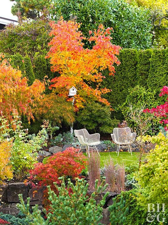 Blooms, structure, increased resale value: Trees and shrubs offer it all. Here's the scoop on planting perfect trees and shrubs.