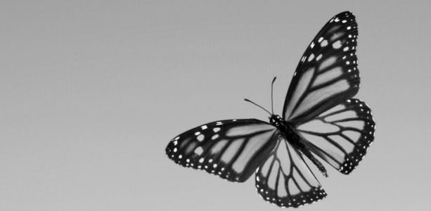 monarch butterfly tattoo black and white - Google Search