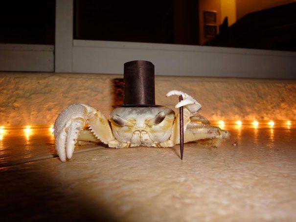 crabe-classe