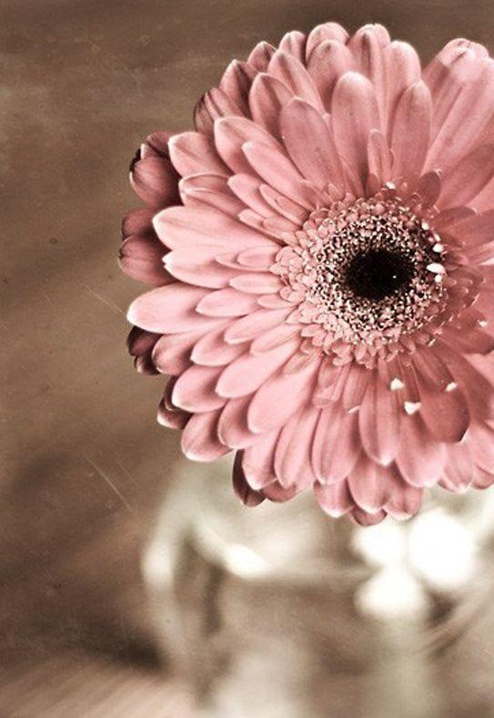 Pink Daisy Tattoo: Best 25+ Gerbera Daisy Tattoo Ideas Only On Pinterest