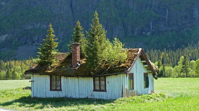 Pays Scandinaves -Toït de chaume.