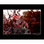 Frosted Leaves Poster   Zazzle