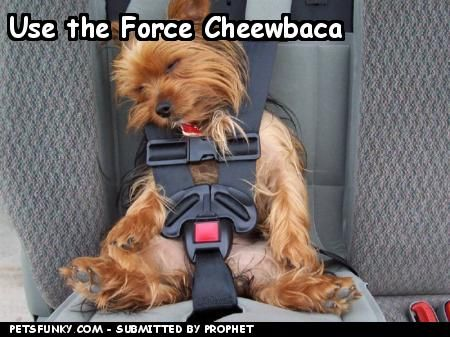 Google Image Result for http://www.petsfunky.com/wp-content/uploads/2008/04/funny-pictures-use-the-force-cheewbaca-047cfbd610.jpg