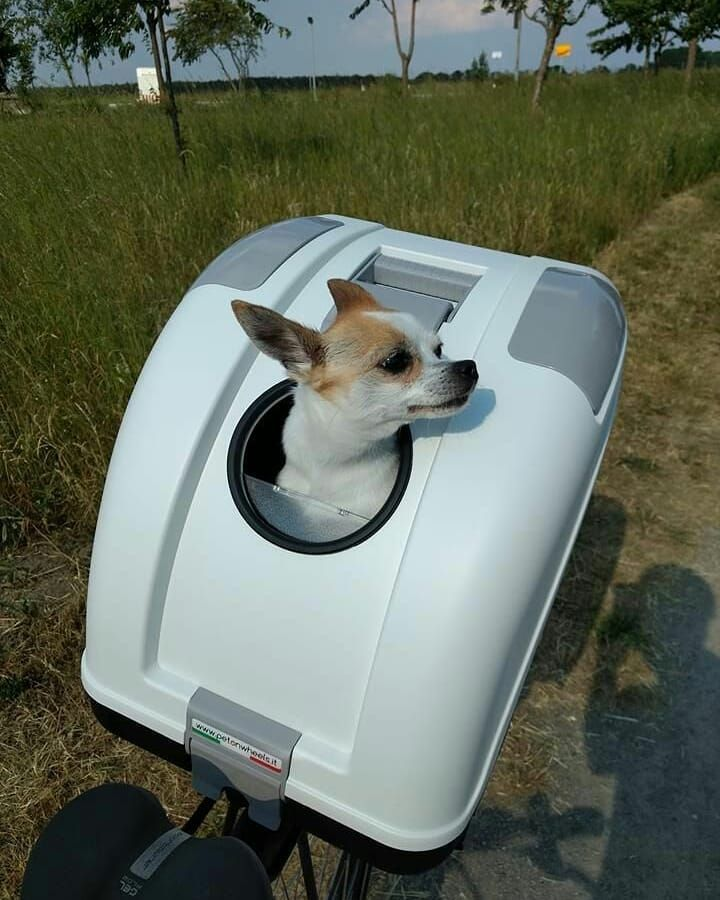 9 Tips That Make Traveling With A Pet Hassle Free Dog Travel Soft Dog Crates Pets