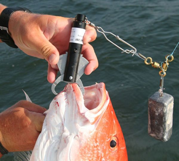 New Device Improves Snapper Catch and Release Survival, May Lead to Longer Fishing Season | Sport Fishing Magazine