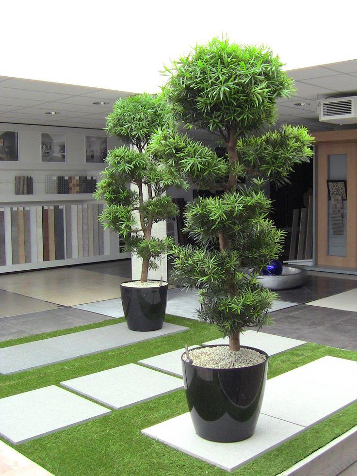 Podocarpus in showroom bij een badkamer bedrijf