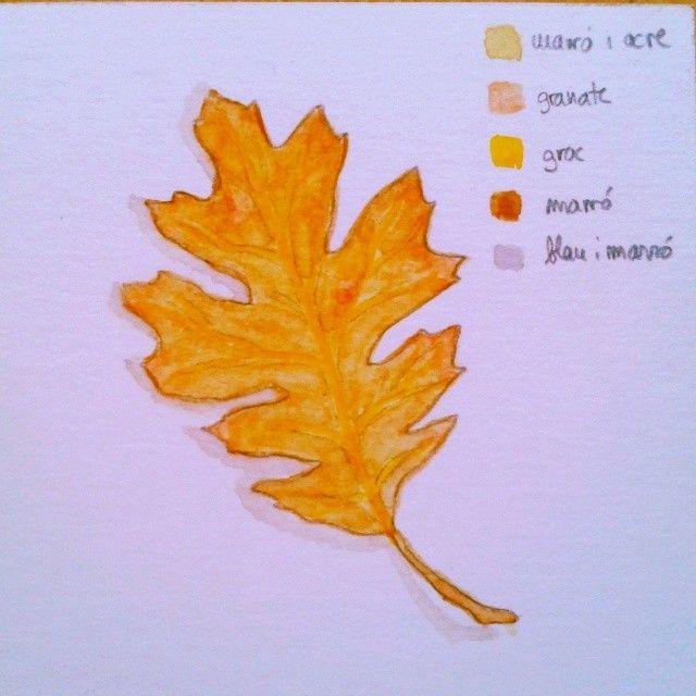 Fulla - Hoja - Leaf