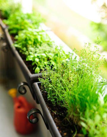 "Window box herb garden - ""budget friendly window box garden""-would be great along the deck."