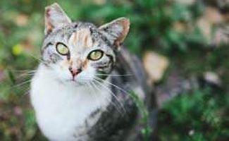 Best Cat Insurance: Who's The Winner?