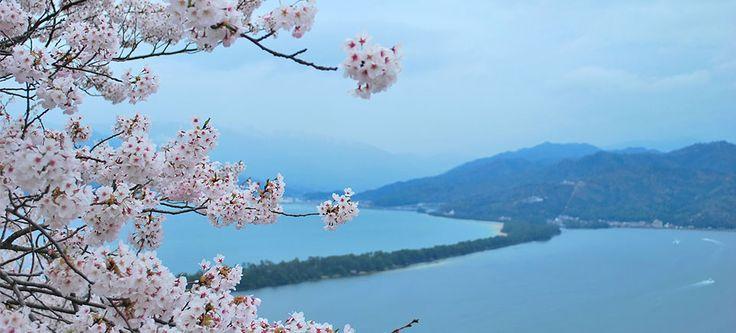 Japan in Bloom