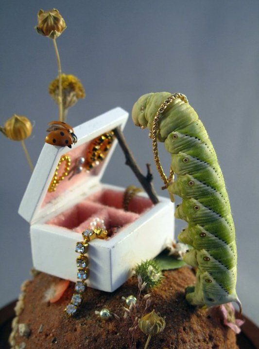 Caterpillar's Jewelry Box- insect dioramas by Lisa Wood