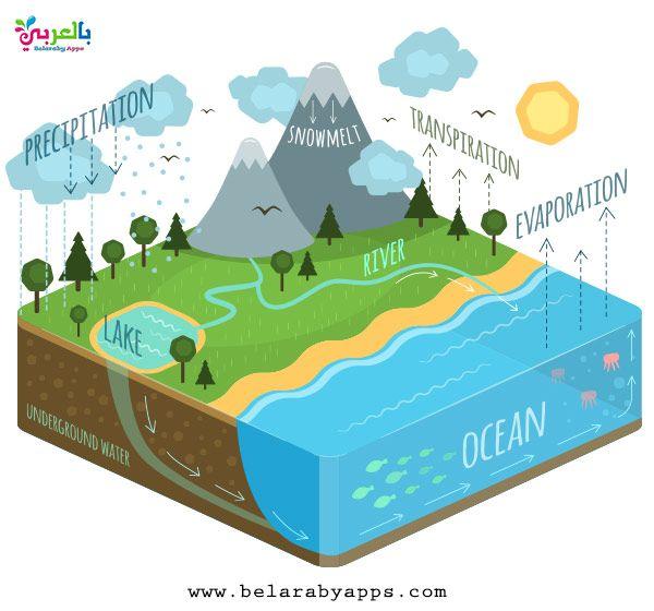 رسومات عن دورة الماء في الطبيعة للاطفال رسم تعليمي بالعربي نتعلم Water Cycle Diagram Water Cycle Water Cycle Project