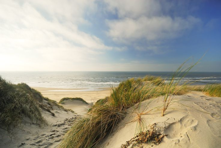 duinen - Google zoeken
