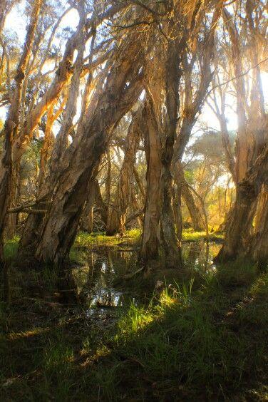 Yellonga Regional Park, Perth