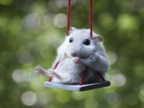 Hamster swinging in the rain. Of course.