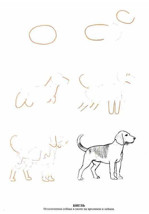 Иллюстрация 6 из 13 для Рисуем 50 собак - Ли Эймис | Лабиринт - книги. Источник: Спанч Боб