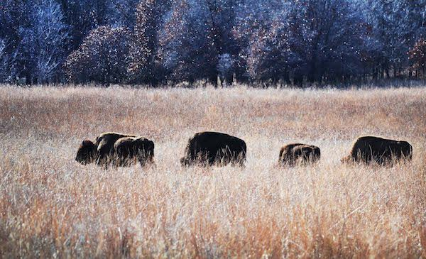 Retrieving Homelands: Osage Nation Wins Bid for Ted Turner's 43,000-Acre Bluestem Ranch - ICTMN.com