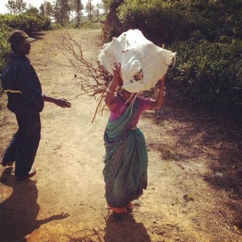 Šri Lanka 2012