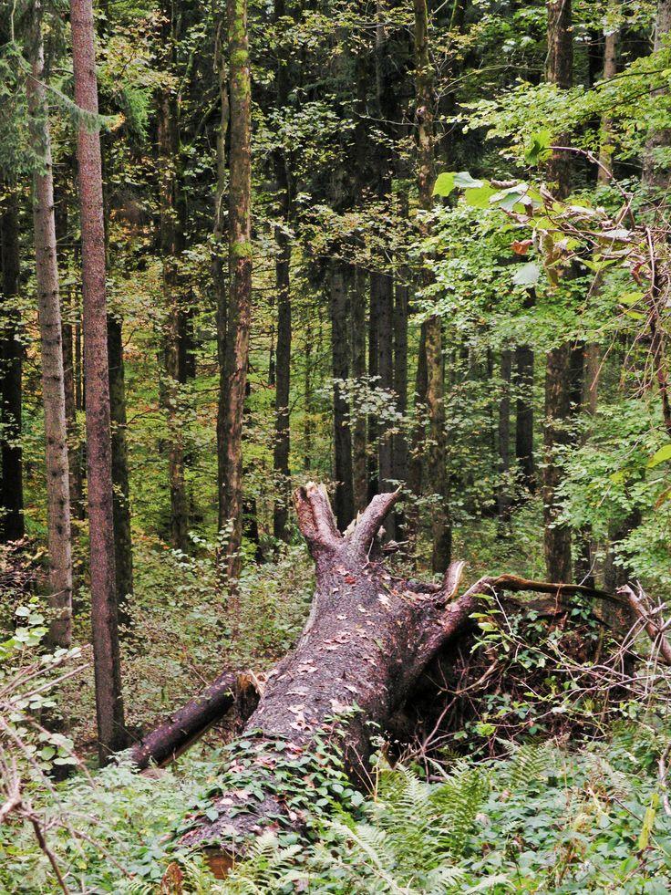 "Nine shots of autumn... photo no.5 ""fallen tree"""