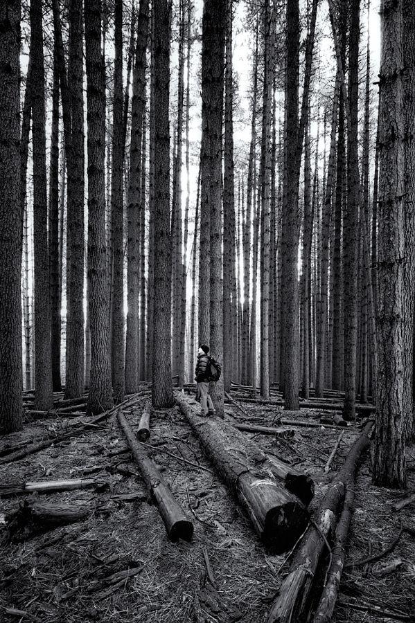 Sugar pine selfie by Matthew Harper - Photo 140808477 - 500px