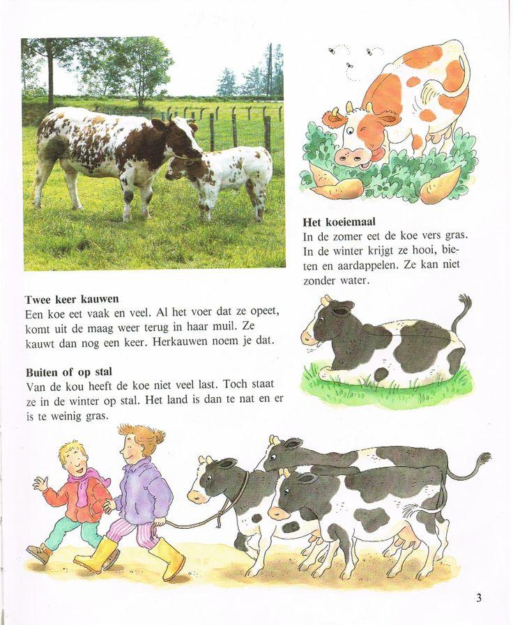 info over de koe 2