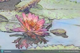 Pink Lotus Flower  #Creative #Art #Photography @touchtalent.com