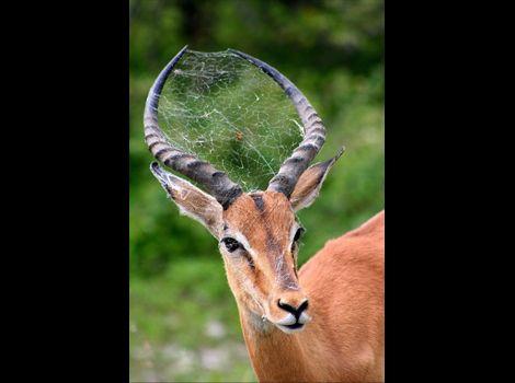 """bacars222:  国と人 - 写真 - 南アフリカ - クルーガー国立公園のオスライオン - ナショナルジオグラフィック 公式日本語サイト  """