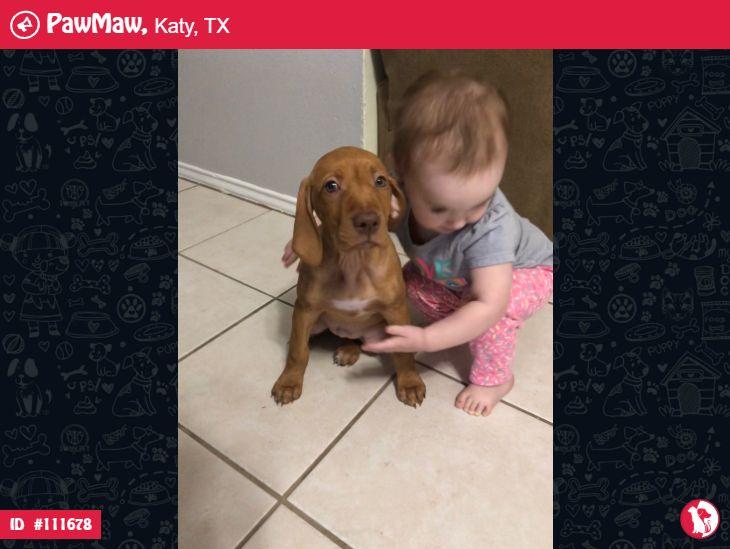 HELP! Stella is Lost in 2020 Vizsla puppies, Losing a