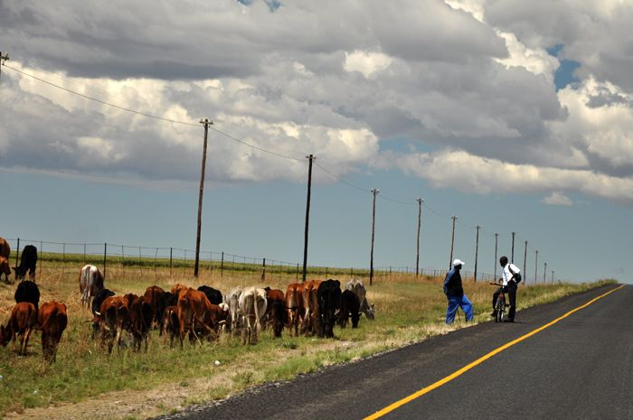 A leisurely conversation on the R74, Free State, South Africa by Anita Cruywagen Photography
