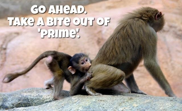 Go ahead. Take a BITE outta 'PRIME!