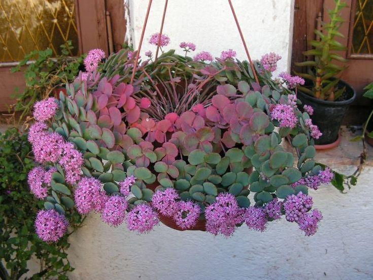 17 Meilleures Images Propos De Plantes Vertes Et Fleurs Sur Pinterest Belle Design Et Interieur
