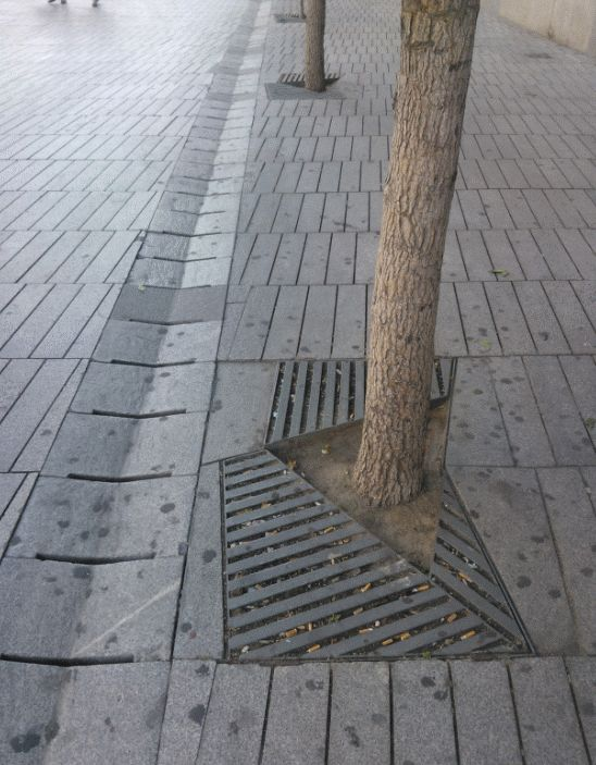 "A tree which is on ""real ground"". The tree pit grid is quite limited."