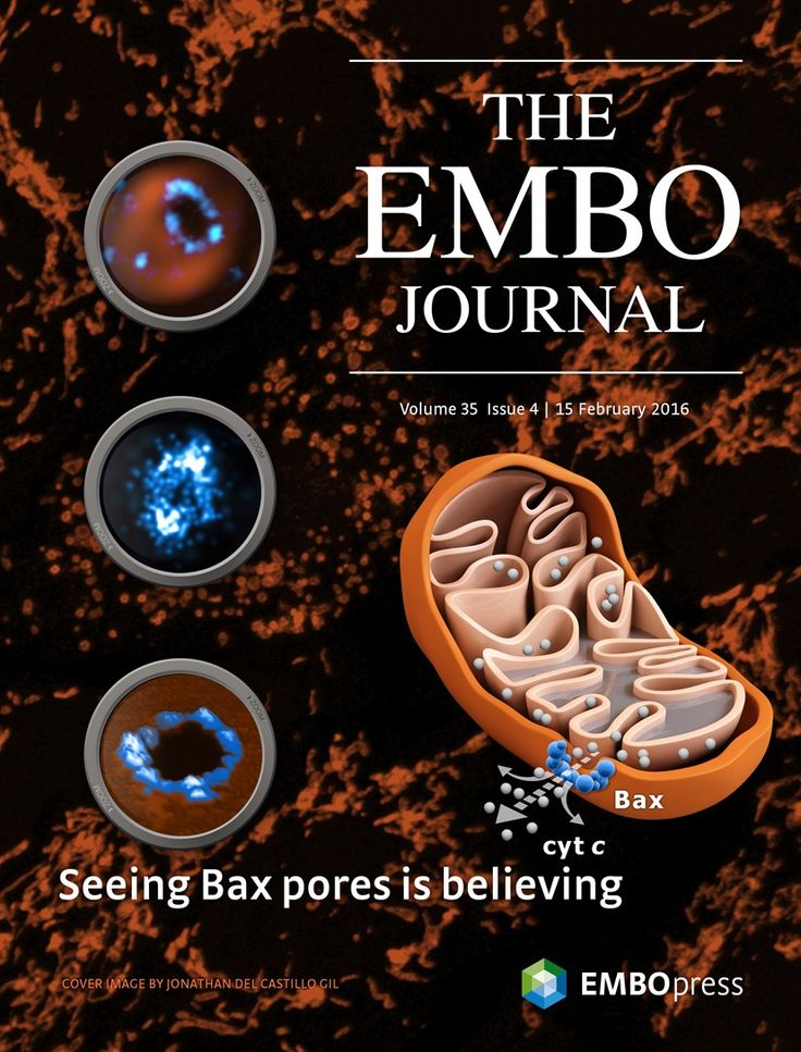 About the Cover — February 15, 2016, 35 (4) | The EMBO Journal