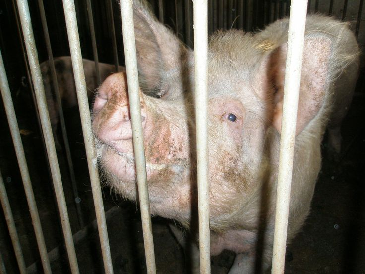 Humane Choice - Coles - Cage & Sow Stall Free