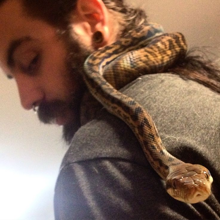 Stewy playing with our tame as can be scrub Python Loki ❤️