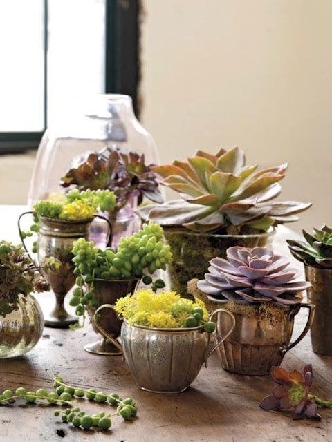 Succulents in antique or vintage silver sugar bowls. This is my favorite way to display lots of different succulents. I put them on different sized silver trays in groups!