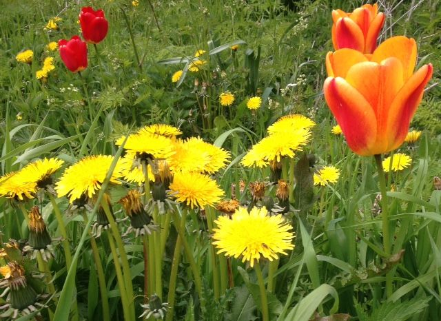 Alkukesä kukkii Makasiinien takana