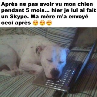 Awww – Québec Meme +