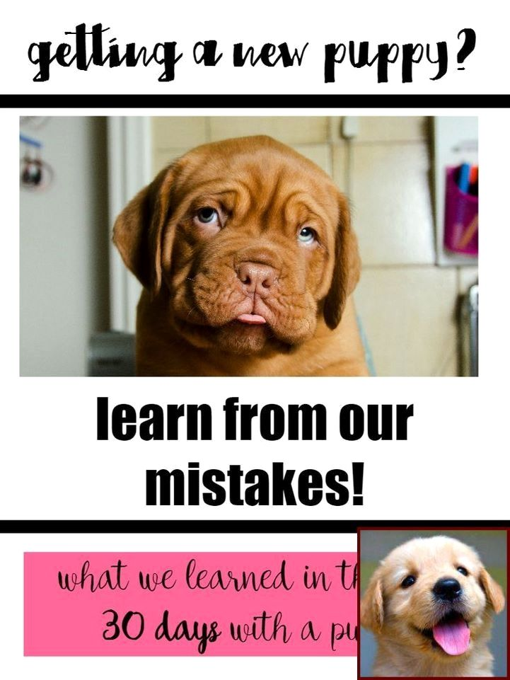 1 Have Dog Behavior Problems Learn About House Training A Puppy With A Bell And Clicker Training Dog Dog Behavior Training Dog Behavior Problems Dog Training