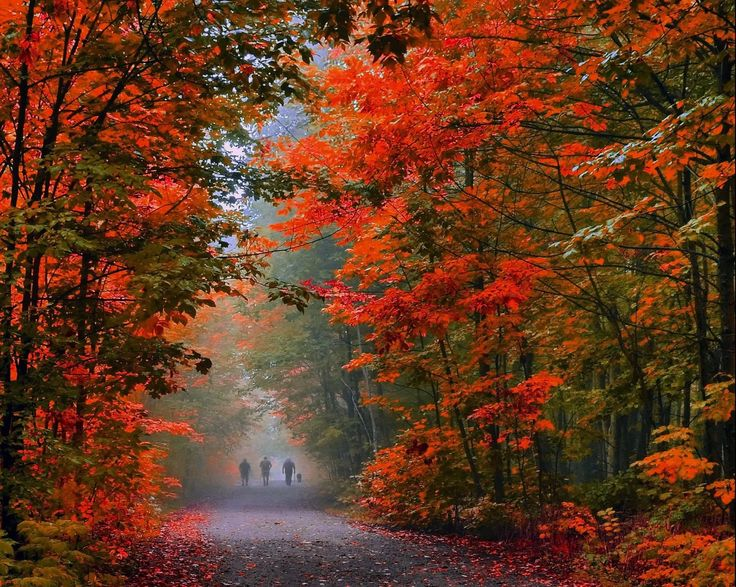 ***Morning walk in autumn (Burlington, Ontario) by Andrzej Pradzynski on 500px