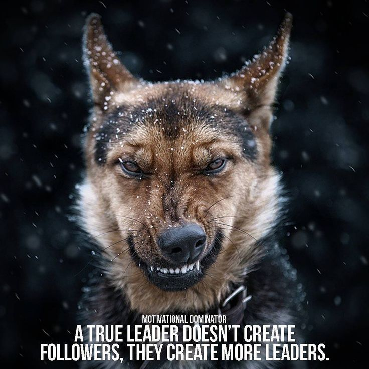 True leaders do this they do not want followers they want NEW leaders who compete with them. They NEED new people to compete with and that is what they create new leaders. Motivational Dominator Picture by: @sergey_polyushko Follow @motivationaldominator on Instagram! I post daily content to dominate your motivation! Spreading positive vibes only from an entrepreneur and marketeer who wants to inspire you. #motivation #motivational #quote #love #motivationmonday #positivity #positivevibes…