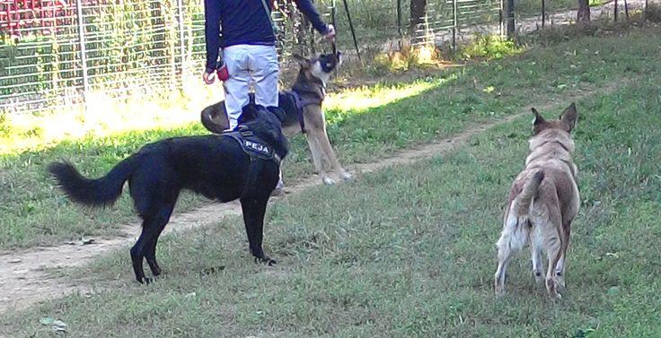 29/09/2015 - Torino con Peja e Musa