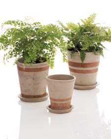 Here's an easy way to give new life to old terra-cotta pots you have around the shed: Paint them to create coordinating stripes. Using masking tape in various widths, mark a simple striped design on the pot. In a well-ventilated area, spray the exterior and the rim (and any accompanying saucers) with weatherproof spray paint; let dry completely. Peel off tape.